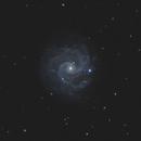"""NGC 3184 - EdgeHD 11"""",                                Andrew Burwell"""