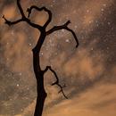 Não basta olhar para o céu - é preciso enxergar,                                Renata Martins Oliveira