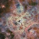 NGC 2070 Tarantula Nebula - LMC,                                Michel Lakos M.