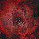 Rosette Nebula HOO,                                chris talpas