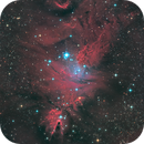 Christmas Tree Cluster + Cone Nebula + Fox Fur Nebula in HOO-RGB,                                Ysty
