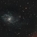 Triangulum Galaxy With 8se & ASI071MC Pro,                                Pat Darmody