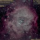 C49,C50 (Sh2-275,NGC2237,Rosette Nebula, Cr99,Mel47,NGC2244,OC in Rosette Nebula, 2017.01.27, 34x4..6min=3h22min, convert2),                                Carpe Noctem Astronomical Observations