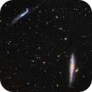 NGC4631 amd friends,                                Achim Armbruster
