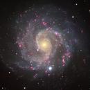 NGC 3184, a Large Spiral Galaxy,                                Ruben Barbosa