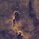 Elephant Trunk Nebula IC1396,                                Rainer Paso