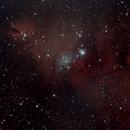 Christmas Tree Cluster (NGC 2264),                                Cesar
