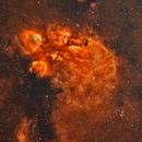NGC6334 The Cat's Paw Nebula,                                David Nguyen