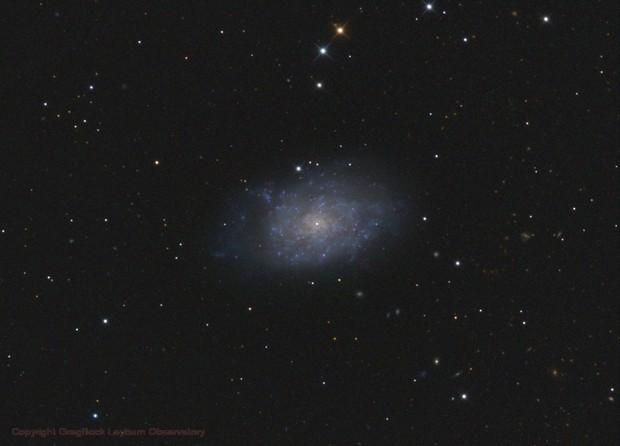 NGC7793,                                Greg Bock