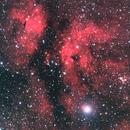γ Cygni (Butterfly) Nebula,                                Caden Gobat