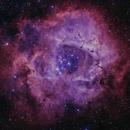 The Rosette Nebula,                                Michael Feigenbaum