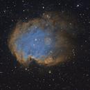 Monkey Head Nebula,                                Ohills
