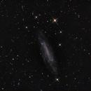NGC 4236,                                PeterN
