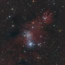 NGC 2264 / Christmas Tree Cluster (RGB),                                Falk Schiel
