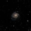 M101 Pinwheel Galaxy,                                Anders Quist Hermann
