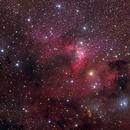 Cave Nebula in Cepheus,                                Nikita Misiura