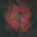 IC1396 stella granata,                                Federico Bossi