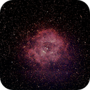 Rosette Nebula NGC 2238,                                David Carr
