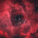 NGC 2239 - Rosette Nebula,                                David Andra