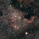 NGC 7000 North America Nebula #4,                                Molly Wakeling