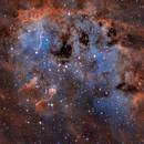 Tadpole Nebula, IC 410,                                Ricardo Pereira
