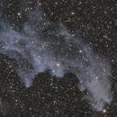 Witch Head Nebula,                                Rathi Banerjee