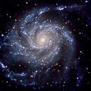 M101 the Pinwheel galaxy,                                  Deddy Dayag