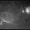 Orion Nebula, Horsehead Nebula and region,                                Newton Cesar Florencio