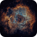 Rosette Nebula in Hubble Palette,                                Brian Poole