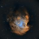 NGC 2174 Monkey Head Nebula,                                Steve