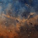 Structure in IC 1396,                                Rodd Dryfoos