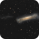 NGC 3628 and tidal tail,                                  Peter Goodhew