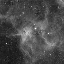 Spider Nebula,                                Roland Christen