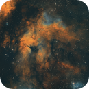 Gamma Cygni Nebula - SHO,                                Elvie1