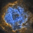 Rosette Blue Flower in SHO,                                Will Czaja