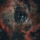 ROSETTE - NEBULA & CLUSTER (NGC 2238 - NGC 2244),                                Roberto Luiz Spenthof