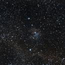 A Faint Seagull, IC 2177,                                astropical