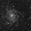 IC 342 Monochrome - The Hidden Galaxy,                                  Ben Koltenbah