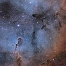 IC1396 (Elephant's Trunk Nebula) Area,                                snakagawa