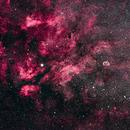 The Cygnus Starcloud,                                Alan Dyer