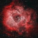 NGC 2244 - Rosette Nebula,                                Kyle Butler