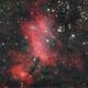 Prawn Nebula,                                Adriano