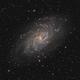 M33,                                Tayson