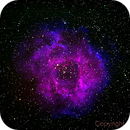 Rosettennebel NGC2237,                                Berthold Schneider