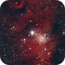 NGC 2264 / The Christmastree Cluster HaRGB,                                Thomas Hellwing
