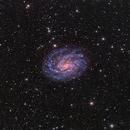NGC 300,                                Alex Woronow