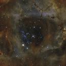NGC 2237, SH 2-275, The Rosette in Ha(HOO),                                Madratter