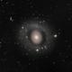 M94 - Croc's Eye Galaxy,                                Maurizio Berti