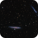 NGC 4631,                                Don Curry