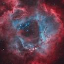 NGC2237 Rosette Nebula,                                Frank Chen